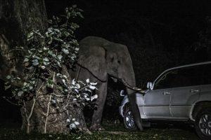 Elephant at car- night